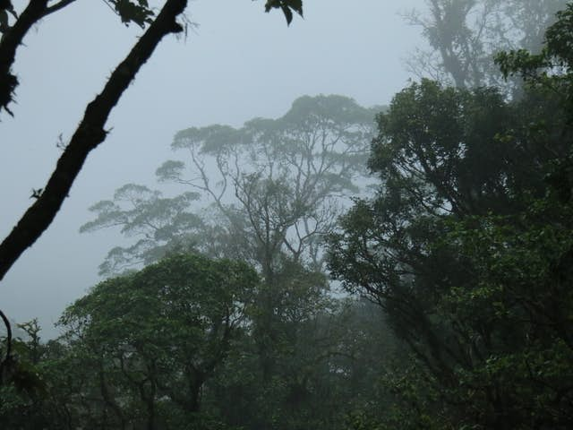 Why should Costa Rica prioritize tropical rainforest preservation?