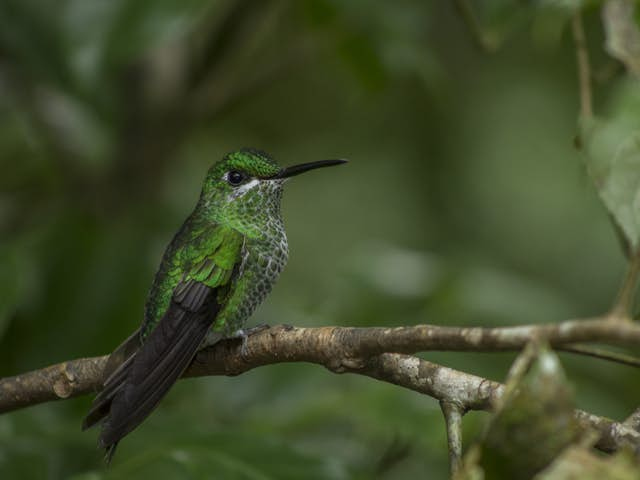 Where is the best location for hummingbird watching in Costa Rica?