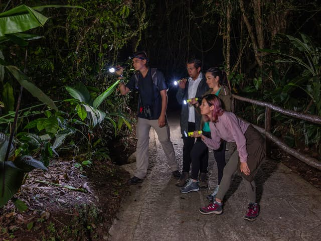 5 Reasons You Have to Do the Mistico Night Walk in Costa Rica