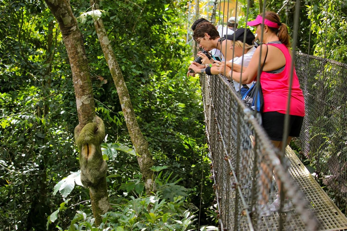 A beautiful sloth close to a hanging bridge at Mistico Park.