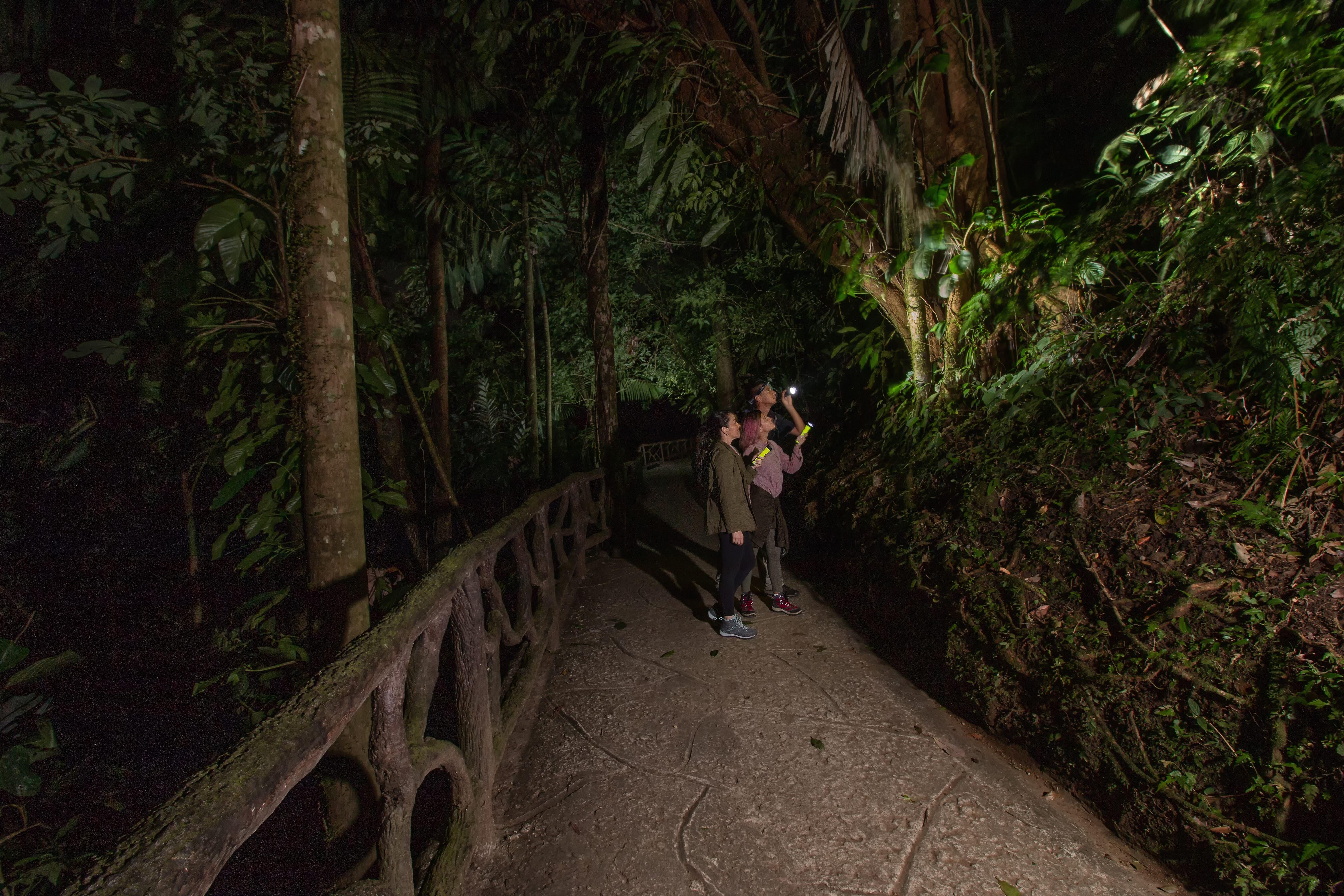 A night walk tour at Mistico Park