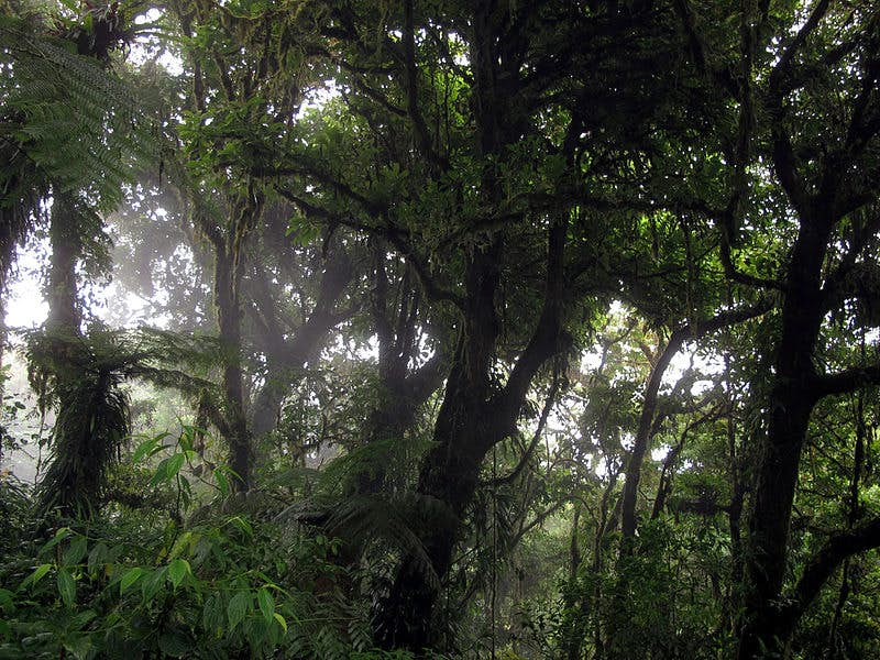 The Monteverde Cloud Forest