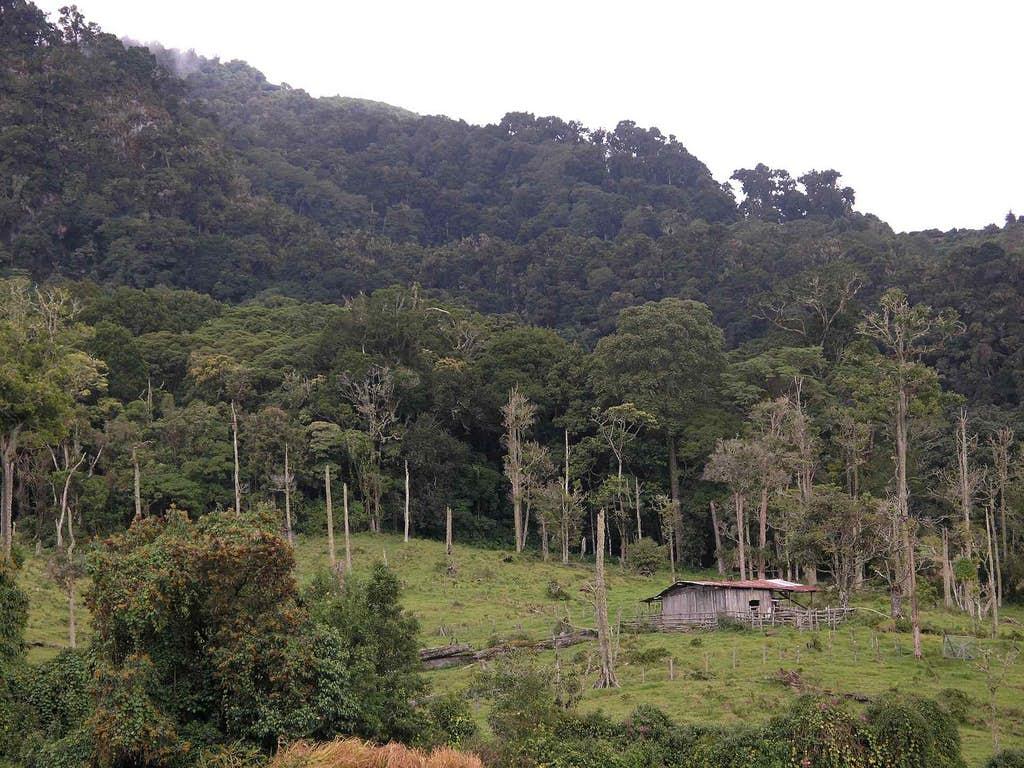 Los Quetzales National Park Costa Rica