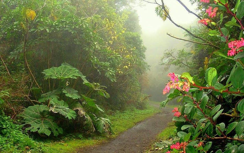 Braulio Carrillo National Park Costa Rica