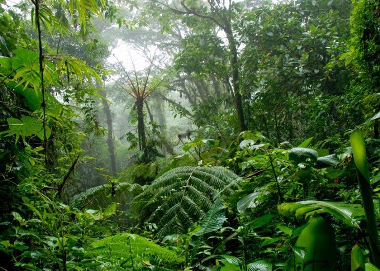 Costa Rica Forest.