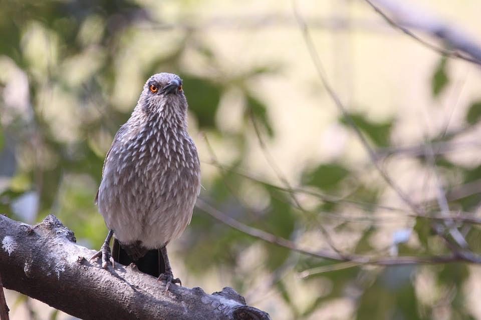 Birdwatching Tour Photo