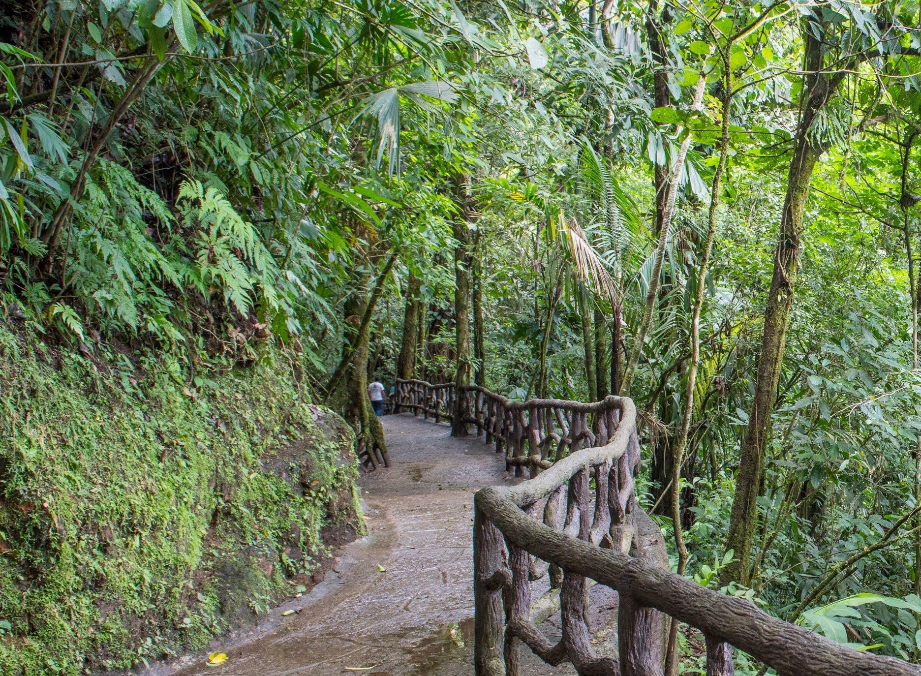 Rainforest walk in Mistico Park