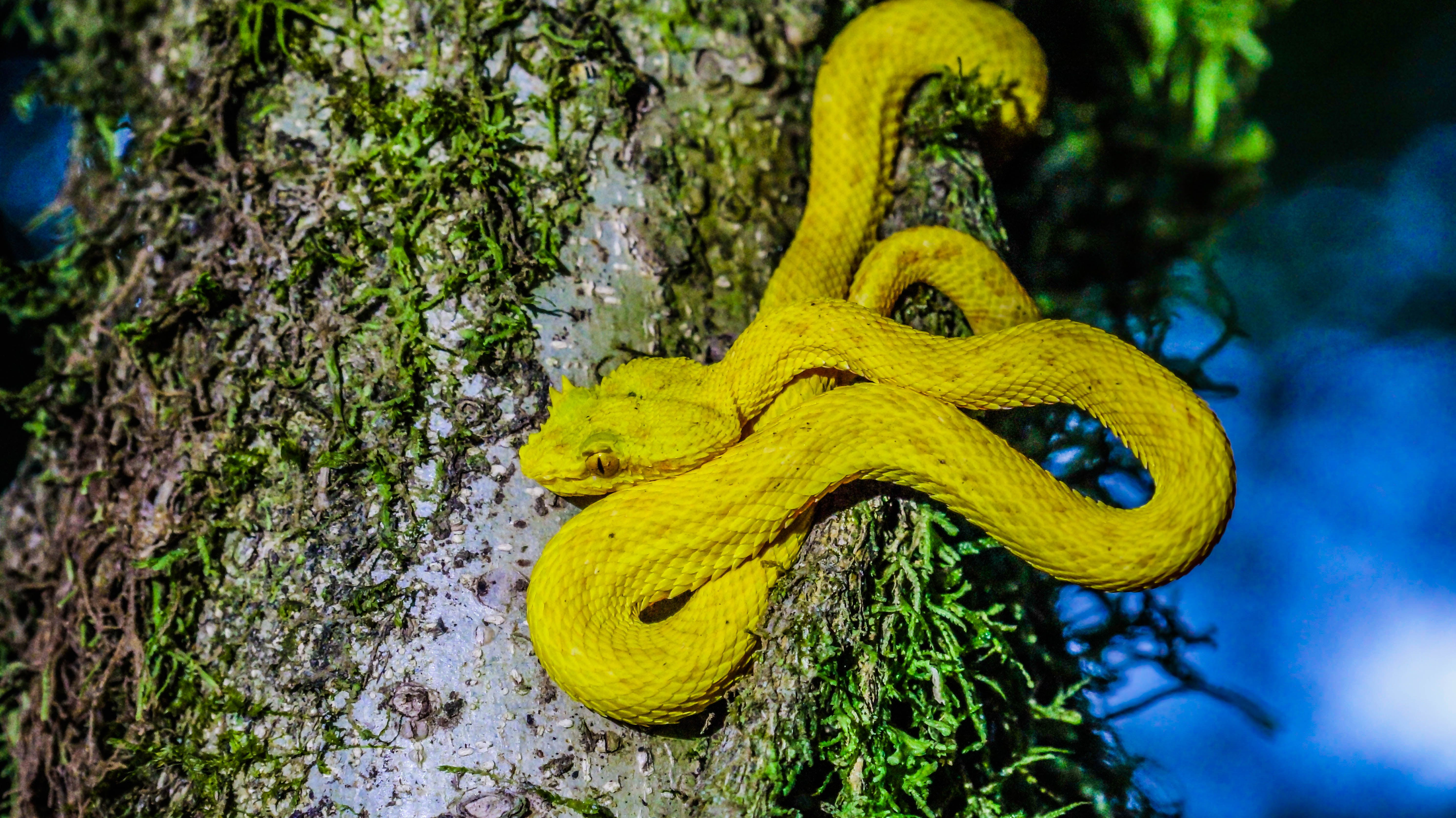 Snake at Mistico Park