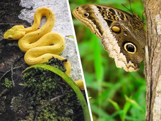 Costa Rica represents at least 5% of the world's biodiversity.