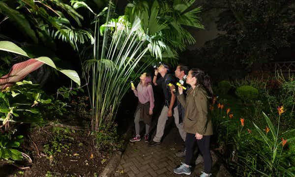 Visitors Enjoying a Night Walk at Mistico Park